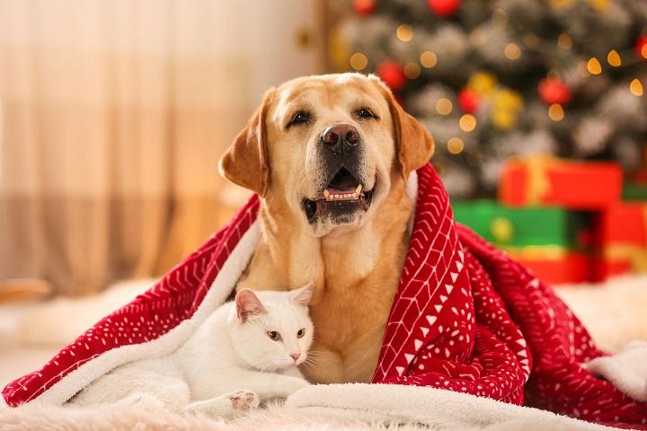 Święta Bożego Narodzenia-trudny czas dla zwierząt domowych